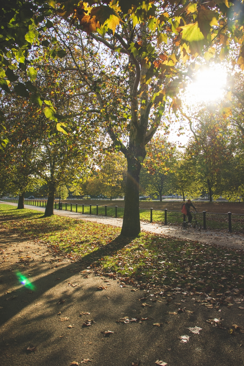 Autumn colours in London